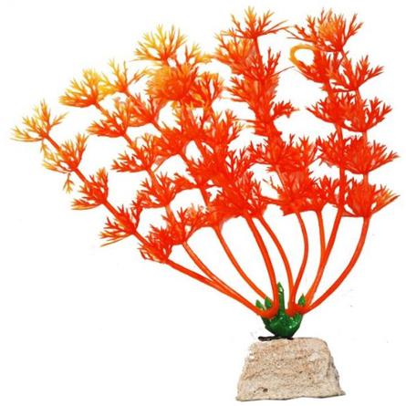 УЮТ Растение аквариумное Амбулия оранжевая